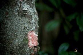 rosto em tronco/montanha encantada/garopaba/sc/brasil/2013/semterritorio