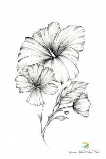 estudo de flores/nanquim em papel montval 300gm/21x30cm/original disponível para venda/R$180,00/semterritorio