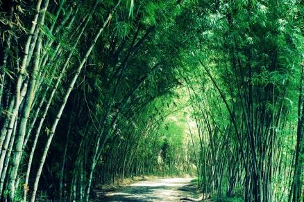 estrada prado-cumuruxatiba/ ba/ brasil/ 2010/ semterritorio