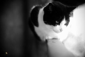 gato/ montanha encantada/ garopaba/ sc/ brasil/ 2013/ semterritorio