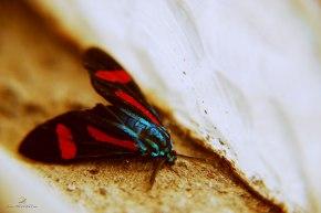 mosca colorida/ curitiba/ pr/ brasil/ 2014/ semterritorio