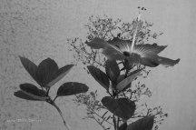 ibisco-04---semterritorio