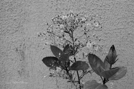 ibisco-05---semterritorio