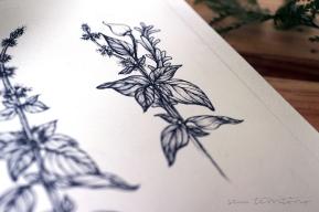 Tatuagem para Suzana Maringone - Manjericão, pimenta, alecrim, canela e sal grosso